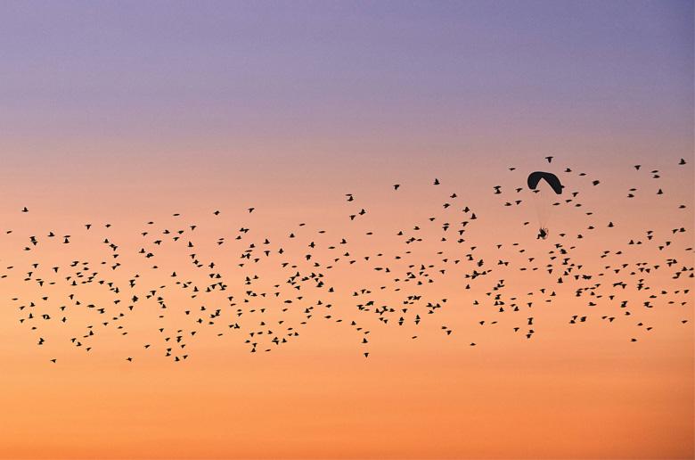 Δες τον paraglider σε μια μαγική πτήση με πουλιά