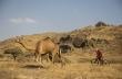 Ακολούθησε τον Rene Wildhaber σε μονοπάτια από καμήλες στο Ομάν