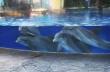 Τα δελφίνια παρακολουθούν τους σκίουρους
