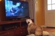 Ο σκύλος προσπαθεί να σώσει τον Leonardo DiCaprio