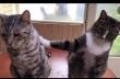 Η γάτα ρουφιάνος