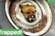Βοήθεια σε μια αλεπού που κόλλησε σε ένα τροχό αυτοκινήτου