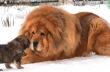 Οι 10 πιο ακριβές ράτσες σκύλων στον κόσμο