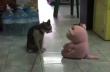 Γάτα vs λούτρινο αρκουδάκι
