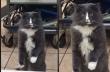Γάτος μένει κάγκελο από τον φόβο