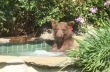 Αρκούδα κάνει το μπάνιο της σε τζακούζι