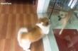 Σκύλος που γαβγίζει…