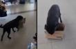 Αδέσποτος σκύλος ζητάει χαρτόκουτα για να φτιάξει το κρεβάτι του