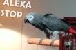 Παπαγάλος ζητά από την Alexa να σταματήσει το τραγούδι