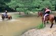 Άλογο ρίχνει κάτω τους αναβάτες του