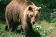 Γιατί δεν πρέπει να ενοχλείς μια αρκούδα