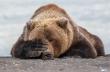 Όταν η άγρια ζωή απαθανατίζεται την κατάλληλη στιγμή
