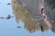 Αλιγάτορας αρπάζει το τάμπλετ ενός τουρίστα