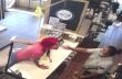 Εξαγριωμένη πελάτισσα σε φαστ-φουντ