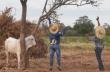 Δύο άνδρες απεγκλωβίζουν έναν ταύρο (Βολιβία)