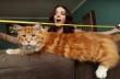 Είναι ίσως ο μακρύτερος γάτος του κόσμου